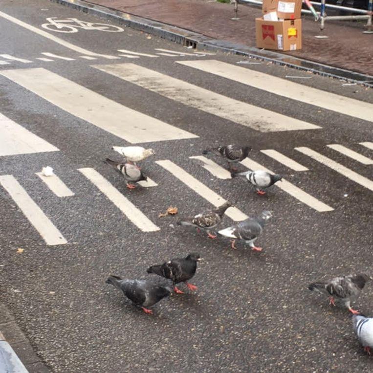 De straat is nu voor de duiven. Beeld