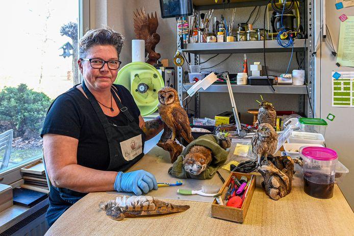 Sonja de Jongste prepareert vogels en zoogdieren. Sinds corona is de vraag naar opgezette dieren in huis explosief toegenomen.