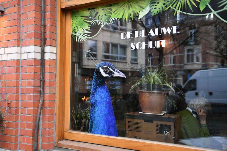 De Blauwe Schuit heropent op het Mathieu de Layensplein.