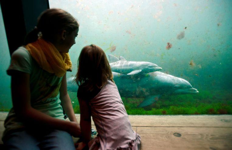 Bezoekers kijken naar een pasgeboren babytuimelaar en haar moeder in het Dolfinarium in Harderwijk. Beeld ANP