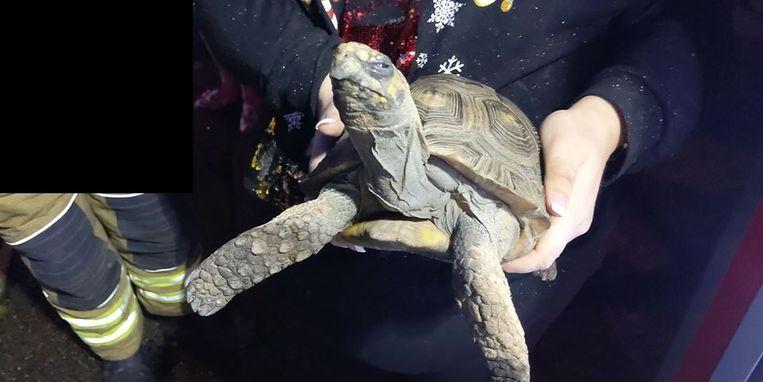 De boze schildpad