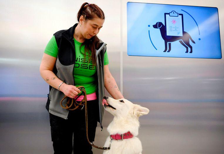 Trainer Anette Kare met snuffelhond E.T., die op de luchthaven van Helsinki met covid-19 geïnfecteerde passagiers kan opsporen.  Beeld Antti Aimo-Koivisto/Lehtikuva/AFP