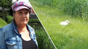Anita waakte tevergeefs bij de zwanenfamilie in Lelystad