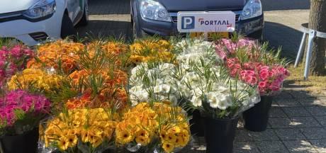 Portaal schenkt huurders 1000 bossen bloemen