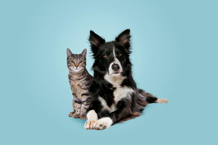Matchen met een hond of kat? Dit asiel plaatst dieren op Tinder Beeld Getty Images/iStockphoto
