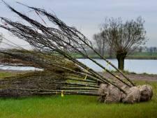 West Betuwe schrikt van eigen besluit: moeten er wel echt 6500 bomen om?