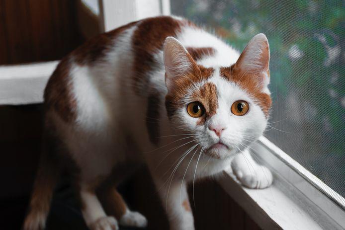 Foto ter illustratie. Vier katten zouden de ontberingen niet hebben overleefd.