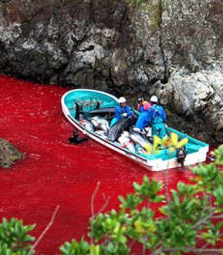 Ook Nederland verafschuwt dolfijnenslacht Japan