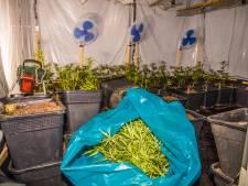 Twee aanhoudingen na vondst wietplantage in Beuningen