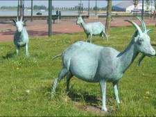 Vijf geiten van Boulevard in Bergen op Zoom gestolen