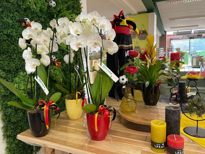 Tuincentrum Meijers EK-orchideeën