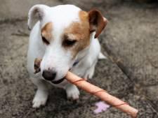 Vrouw verwaarloosde hondjes Jackie en Kiki: 'Ze lagen lusteloos in hun braaksel'