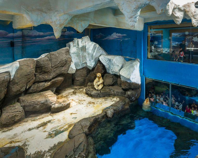 Wuhan Haichang Polar Ocean World, China. Beeld Sheng-Wen Lo