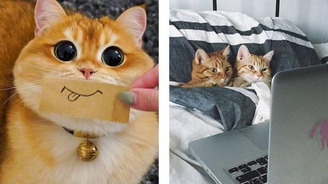 Twitteraccount geeft kinderen het ultieme argument om ouders te overtuigen een kat in huis te halen