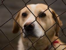 Un Wanzois condamné pour traitement dégradant et négligence de trois chiens