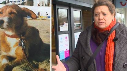 Auto gestolen met hondje erin: Kristin uit Deurne wanhopig op zoek naar Maria