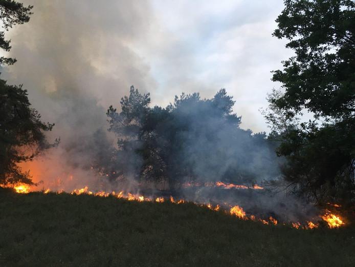Aan de Heidepolweg in Vorden is donderdagavond een grote natuurbrand uitgebroken.