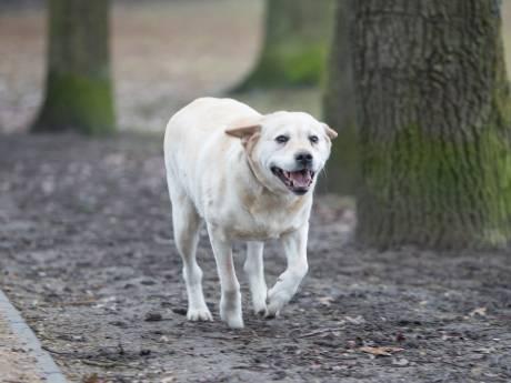 Baasje negeert gewonde fietser die viel na ontwijken van loslopende hond