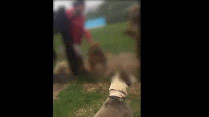 VIDEO: man met vier bully's laat buurtbewoners niet op Antwerpse hondenwei