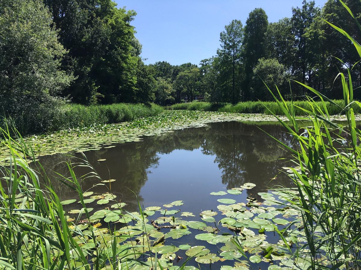 De vijver in het Van Sonsbeeckpark