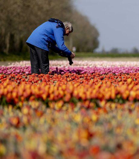 Nederland kleurt groener op coronakaart, Spanje wordt roder