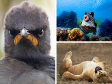 Les animaux les plus drôles du Comedy Wildlife Photography Awards 2021