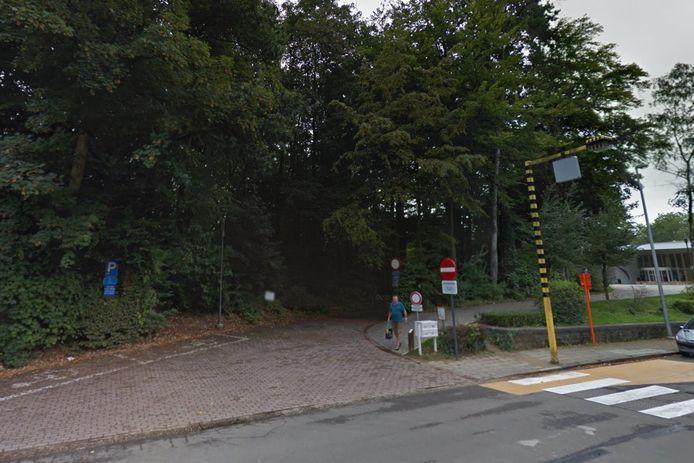 Een aantal eeuwenoude bomen in het Scheldepark moeten binnenkort gerooid worden.