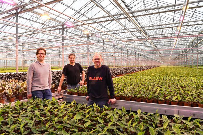 Niels, Joost en Leon (v.l.n.r.) de Groot, van Kwekerij de Groot, in de kas. Daar proberen ze uit of  paars en oranje-geel licht invloed heeft op de groei van de planten