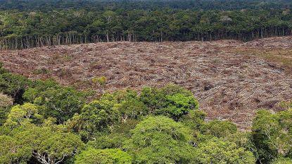 Ontbossing van Amazonewoud blijft toenemen