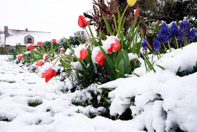 En seconde partie de nuit ou lundi matin, des averses parfois hivernales gagneront le pays depuis la côte. De la neige tombera par endroits et pourrait temporairement tenir au sol.