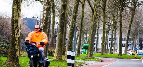 Laatste sprankje hoop voor acht van de 34 platanen langs Stadspolderring in Dordrecht