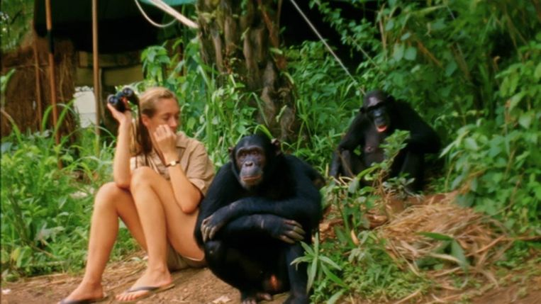 Jane Goodall in 'Jane'. Beeld Disney+
