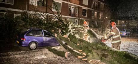 Bomen vallen op auto's en tegen gebouwen: Brandweer is druk met schade door storm in de regio