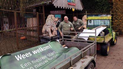 """Medewerkers leggen laatste hand aan heropening Olmense Zoo: """"Zo blij dat we er weer staan"""""""