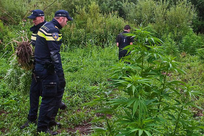 In de Biesbosch in Dordrecht werden in juli drie grote hennepvelden ontdekt door de wijkagent en personeel van Staatbosbeheer. Zij waren de velden op het spoor gekomen nadat een politiehelikopter op verzoek van Staatsbosbeheer foto's had gemaakt.