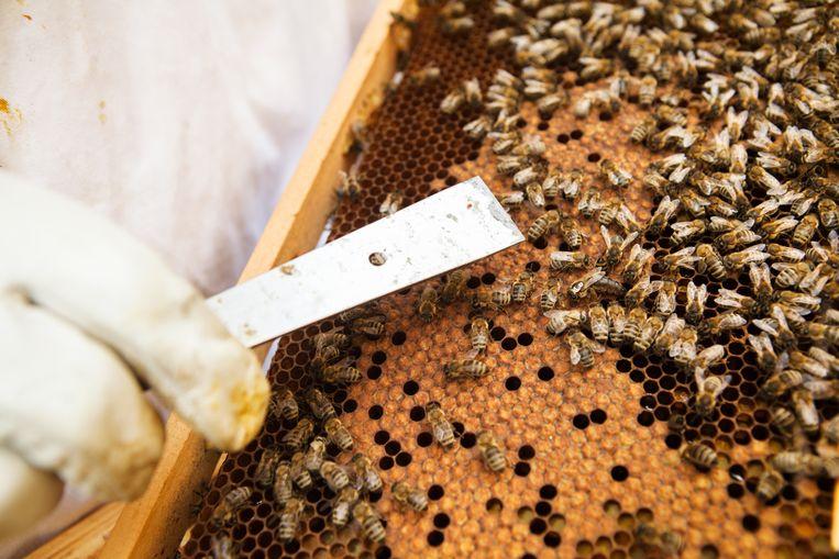 Een bijenkast.