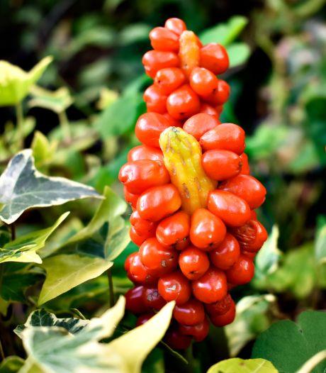Deze planten zorgen voor blingbling in de wintertuin