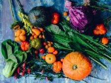 """Le Veggie Challenge, """"une fausse bonne idée soutenue par nos politiques"""""""