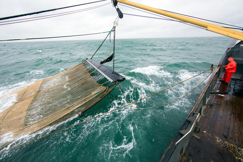 Een Nederlandse pulsvisser aan het werk op de Noordzee. Donderdag keerden de laatste boten terug in de haven. Toen ging het Europese pulsvisverbod in. Beeld Ton Koene / AP