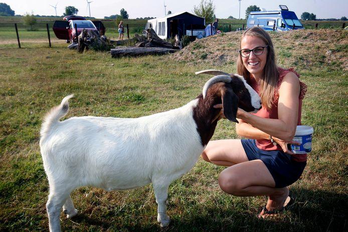 Goedemorgen! Wie op de camping van Marjo van Raaij wakker wordt, krijgt waarschijnlijk een groet van een van haar dieren, zoals deze geit.