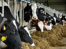 Raad van State zet Noord-Brabant buiten spel in conflict Diessense veehouder