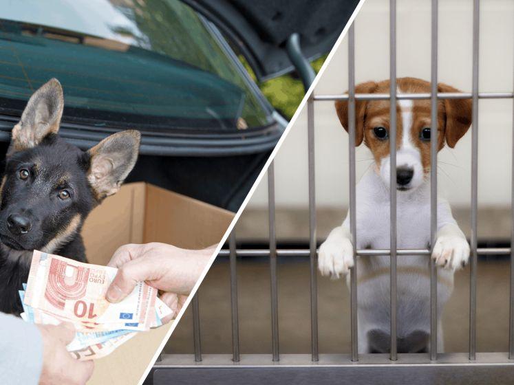 House of Animals lanceert meldpunt gedupeerde puppy-kopers
