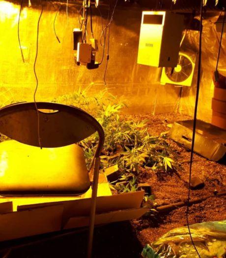 Weer hennepkwekerij opgerold in Noordoostpolder: 170 planten aangetroffen in Tollebeek