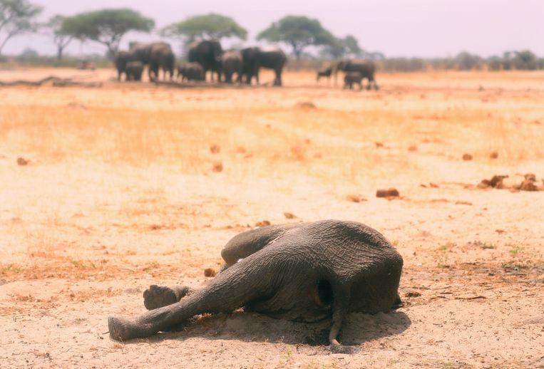 Vier graden opwarming: door de verzengende hitte storten samenlevingen over de hele wereld compleet in. Beeld AP