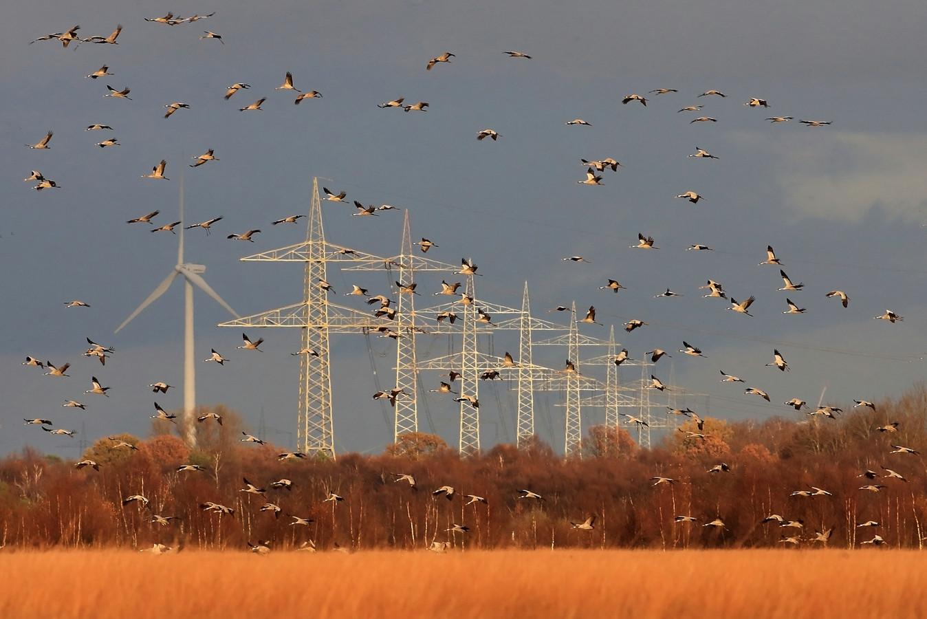 Kraanvogels moeten tijdens de trek rekening houden met hoogspanningsmasten en windturbines.