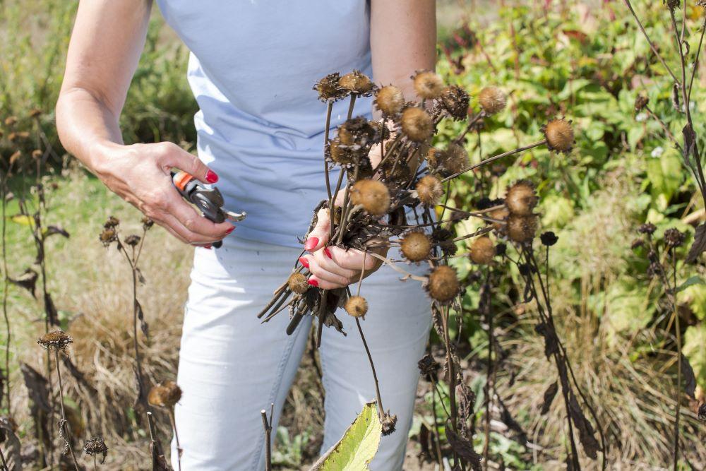 Pluimpjes van wilde grassen, duizendblad, boerenwormkruid, korenbloemen, fluitenkruid, wilde peen en de zaaddozen van papavers zijn bijzonder dankbare droogbloemen