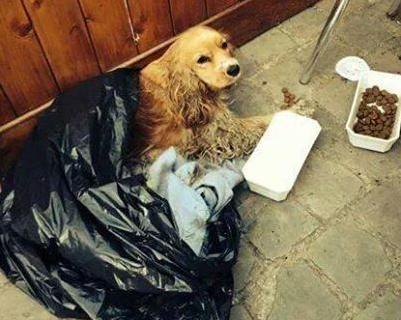 De verwaarloosde hond werd in Roesbrugge gevonden.