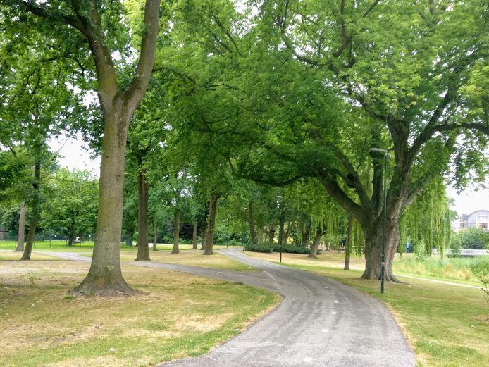 Bomen in het Julianapark in Veghel.