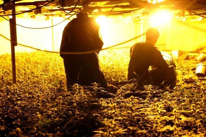 Een hennepkwekerij in Roosendaal is ontdekt en wordt ontmanteld. foto Remco de Ruijter