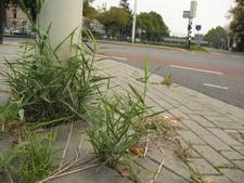 Felle kritiek op onderhoud openbare ruimte Roosendaal